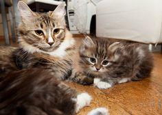 Крошка-кот к котэ пришел