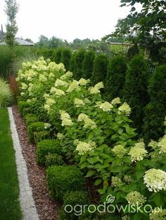 A garden return to childhood. - page 1276 - Garden forum - Garden, Hydrangea Landscaping, Privacy Landscaping, Driveway Landscaping, Arborvitae Landscaping, Acreage Landscaping, Landscaping Design, Outdoor Landscaping, Backyard Patio, Backyard Ideas