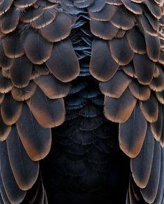 [CasaGiardino] ♡ Oriental Turtle Dove by Y. Naraki on Flickr