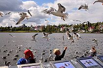 Möwen am Tjörnin See, Reykjavik, Island, Europa
