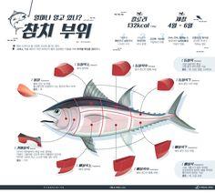 알고 먹어야 맛있는 참치 부위별 특징 [인포그래픽] #tuna / #Infographic ⓒ 비주얼다이브 무단 복사·전재·재배포 금지