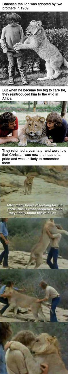 The Story of Christian the Lion