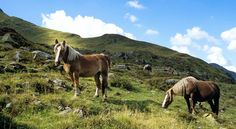 Horses at the Mountain S, Lodges, Animals, Cabins, Animales, Animaux, Animal, Animais, Chalets