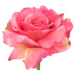 """This Georgia Rose features the same attention to detail and realistic look the Fresh Picked collection is known for.   It includes one bloom of approximately 5"""" diameter and 13 leaves ranging from 7/8"""" x 1 1/4"""" to 2"""" x 3""""."""