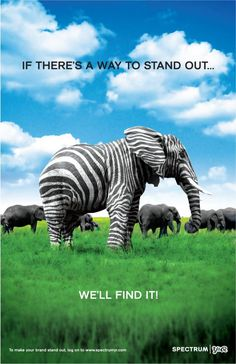 """If there's a way to stand out...we'll find it!""  Well, they definitely hit the nail on the head.  They got my attention with the contrasting Zebra colors on an elephant.  The ad has nice font, colors and placement of everything."