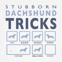 This, unfortunately, describes one of my dogs!