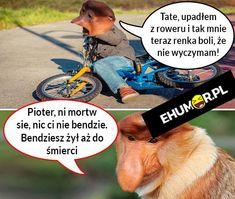 Kiedy Pioter wywali się na rowerze xD – eHumor.pl – Humor, Dowcipy, 😋 Najlepsze Kawały, Zabawne zdjęcia, fotki, filmiki