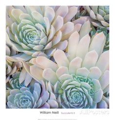 Succulents II Posters by William Neill at AllPosters.com