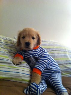 Puppy in footy pajamas