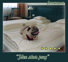 """Five star Pug"" - http://europug.eu/five-star-pug/"