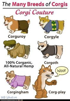 Google Image Result for http://icanhascheezburger.files.wordpress.com/2012/05/funny-pictures-the-many-breeds-of-corgis-corgi-couture2.jpg