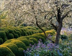 Backyard Laboratory: Jacques Wirtz's own garden, with its famous boxwood hedges, in Schoten, Belgium. Photo: Alfred Seiland