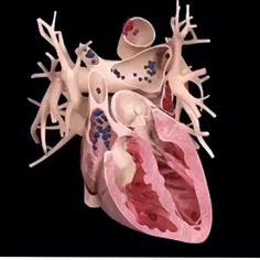 ✅Curta nosso facebook: fisioterapia.hospitalar ➖➖➖➖➖➖➖➖➖➖➖➖➖➖➖ #anatomy #cardio  #fisioterapia #cardiologia  #coraçao #fisioterapeutas #academia #fisio #heart #anatomia #medical #cardiology #medicine #pilates #myocardium #pilatesbrasil #coracao #heartattack #enfermagem #medicina #miocardio #fisioterapiacomamor #educaçãofísica #medico #educacaofisica #myocarditis #fisios #cardiologista #corazon #coraçãoapertado
