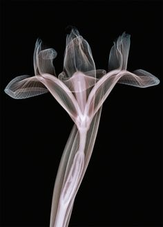 X-ray art by UK based artist, Nick Veasey...
