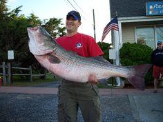 61.4 lb striped bass (surf)