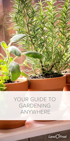 If you love to garden but don't have the backyard or budget for it, don't worry. Try these simple tips to gardening in a small yard, or even container gardening with a mason jar!
