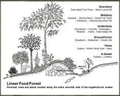 Food Forests & Plant Guilds in Permaculture Design ~Family Food Garden