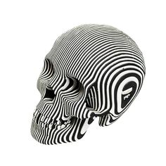 'Vince Cardboard Human Skull' is a build-your-own skull sculpture from Cardboard Safari. Made of recycled, laser-cut cardboard, the product is shipped flat, and Cardboard Sculpture, Cardboard Paper, Sculpture Art, Paper Sculptures, Skull 3d, Human Skull, Safari, Totenkopf Tattoos, Marquesan Tattoos