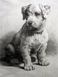 "This Piece named ""A Sealyham Pup (Un cachorro de Sealhyam terrier)"" drawn by Herbert Thomas Dicksee is a great example of Drypoint etching. Pencil Art Drawings, Love Drawings, Animal Drawings, Dog Portraits, Drawing Techniques, Dog Art, Painting & Drawing, Amazing Art, Illustration"