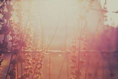 Etsy Cover Photo – Les Bijoux Fleur du temps