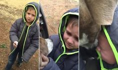 The most emotional reunion: Dog returns and surprises his owner