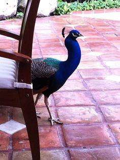 """Самый маленький гость в нашем отеле """"только для взрослых"""". Мы поселили эту чудесную птицу в нашем саду, чтобы гости смотрели на нее и чувствовали себя во время отдыха свободными, как птицы))"""