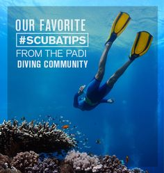 Read our top scuba tips from members of the PADI diving community. #nottreadingwater