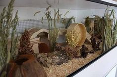 33 Hermit Crab Tank that's Easy to Create - meowlogy Hamster Tank, Baby Hamster, Hamster House, Dwarf Hamster Cages, Cool Hamster Cages, Hamster Terrarium, Hermit Crab Tank, Hermit Crabs, Hedgehog Cage