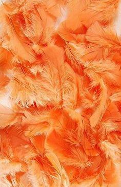 ideas for wallpaper paisagem laranja Orange Aesthetic, Rainbow Aesthetic, Aesthetic Colors, Aesthetic Pictures, Orange Pastel, Light Orange, Orange Yellow, Orange Color, Orange Zest