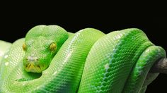 Snake Facts for Kids; Ever Wondered About Snake Facts? Snake Facts For Kids, Animal Facts For Kids, Animals For Kids, Funny Animal Pictures, Funny Animals, Cool Pictures, Zoo Animals, Nocturnal Animals, Extinct Animals