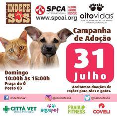 BONDE DA BARDOT: RJ: Adoção de cães e gatos na Barra da Tijuca, neste domingo (31/07)