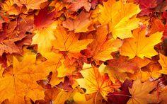 autumn wallpaper backgrounds hd