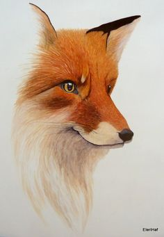 The Cunning Red Fox by Jenn Stuhl on Etsy