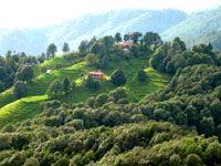 Binsar Hill