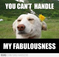 You can't handle my fabulousness