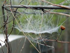 An Ordinary Spider Web and its Owner by penny pausch on Capture Arkansas // I loved the lines in this photo and how they seem so balanced together.
