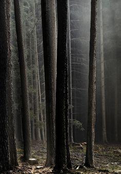 Trees  byJörg Marx.