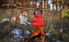 Keep Your Dog Safe From These 10 Outdoor Dangers  #dogsafety