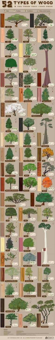 Plans of Woodworking Diy Projects - Familiarity with #tree types and #wood grain is one of the most important skills of #woodworking. Get A Lifetime Of Project Ideas & Inspiration! #woodworkdiy  #WoodworkDIY
