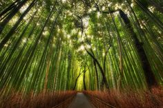 Het bamboebos in Sagano, Kyoto, Japan