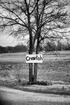 "Black and white landscape photograph of a tree with a hand-painted sign that says ""crawfish,"" in the Mississippi Delta region, near Tunica. Standard Prints: - Printed on real silver-based Resin Coated"