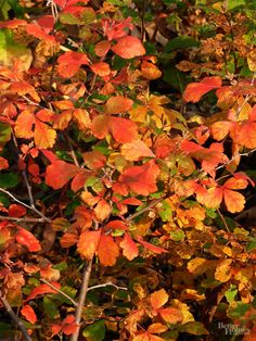 1000 images about gardening native plants on pinterest native plants perennials and shrubs - Planting fruit trees in the fall a garden full of vigor ...
