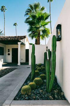 Modern Landscaping, Outdoor Landscaping, Succulent Landscaping, Backyard Patio, Cactus Garden Ideas, Outdoor Cactus Garden, Outdoor Gardens, Landscape Design, Garden Design
