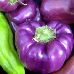 peppers - purple & green