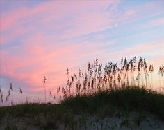 OBX Connection - Outer Banks Photo/ Sea oats at Sunrise