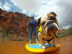 Stand up paddle boarding (SUP) can be a great activity in the summer for the...  Read more »