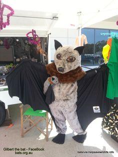 gilbert the bat - FaceBook bats.org.au