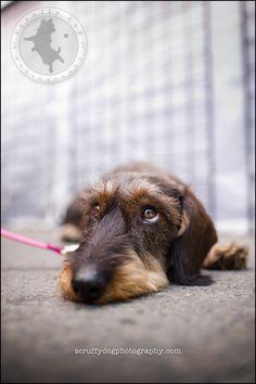 .© Scruffy Dog Photography.