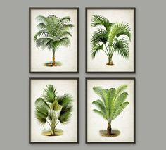Palm Tree mur botanique Art Print Set de 4 - Modern Home Decor - Palm Tree livre Illustration impressions - Palm Tree botaniques - AB553