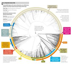 All 2.3 Million Species Are Mapped into a Single Circle of Life, by Mark Fischetti  Lineages of all known species on earth are finally pieced together